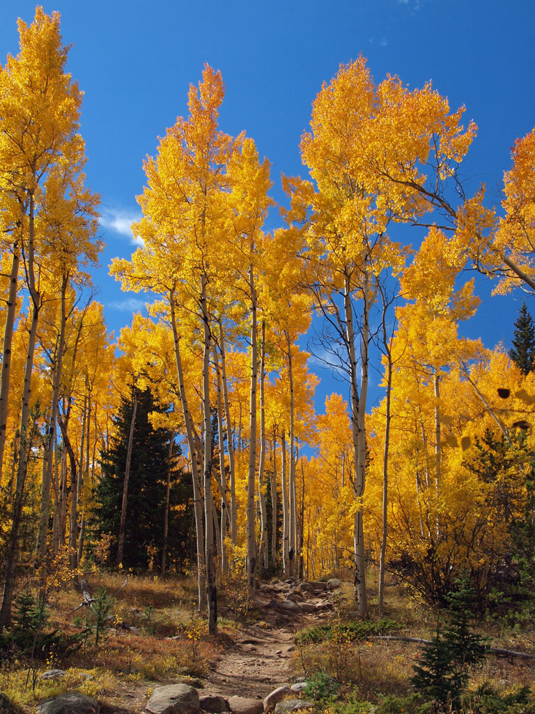 Aspens, Hells Hole trail